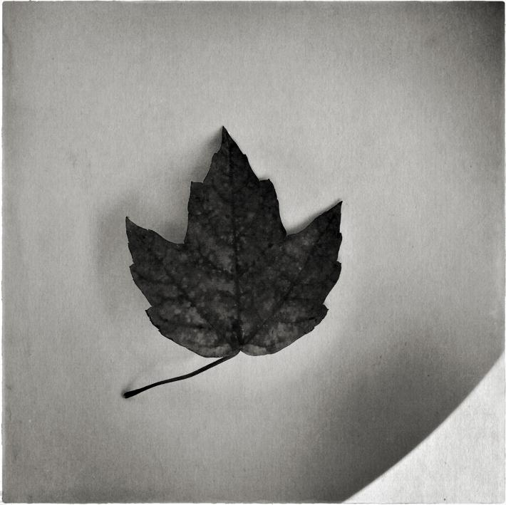 leaf2016